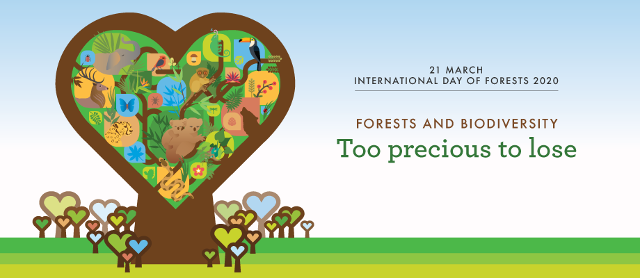 3-19-2020 International Day of Forests Banner